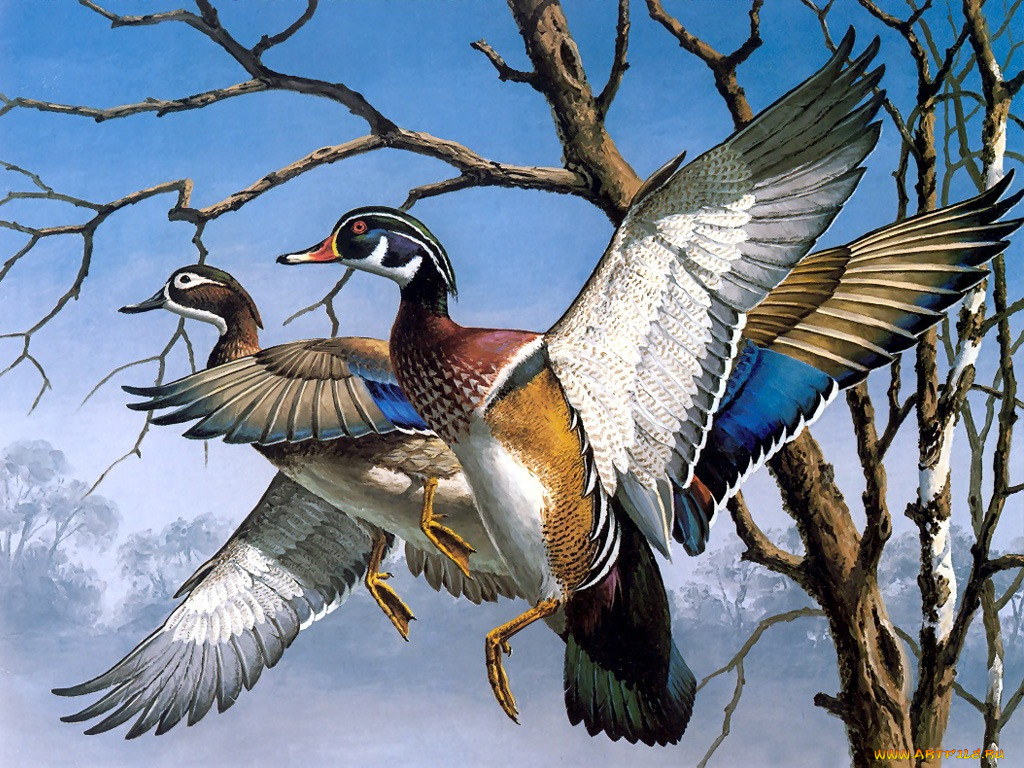 картинки иллюстрации птиц последним